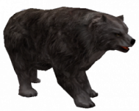 Niedźw. Grizzly.png